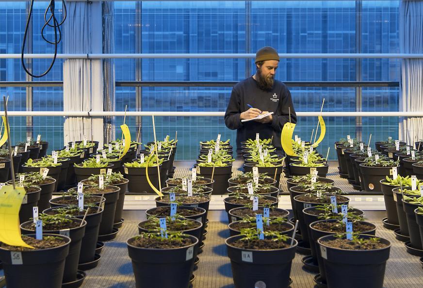 Plantene drives opp fra frø til plante i den testede jorden. Foto: Anna Sigge