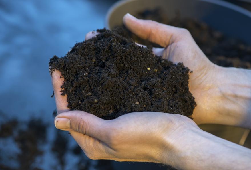 Jordens kvalitet og struktur vurderes før dyrkingen starter. Foto: Anna Sigge