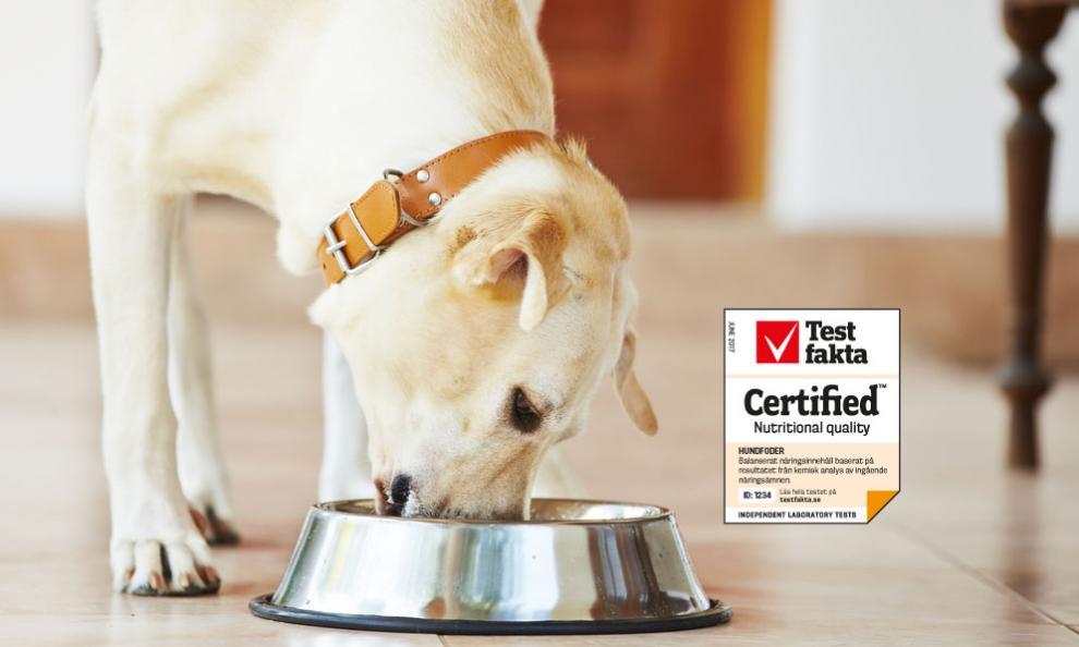 Testfaktas kvalitetssertifisering av hundefôr sikrer at fôret er næringsmessig balansert og at det gir hunden et riktig inntak av alle nødvendige næringskomponenter. Foto: Istockphoto